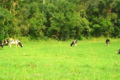 Produtores rurais devem declarar os animais existentes nas suas propriedades